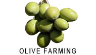 Olive Farming Category Navigation